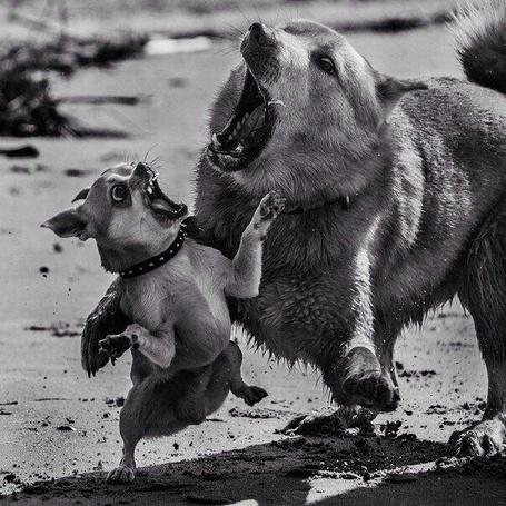 Фото Забавные игры маленьких собачек