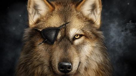 Фото Волк с повязкой на одном глазу