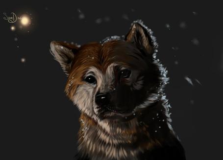 Фото Арт с собакой по кличке Хатико к фильму Хатико: самый верный друг / Hachiko: A Dogs Story, by Salamandra-S