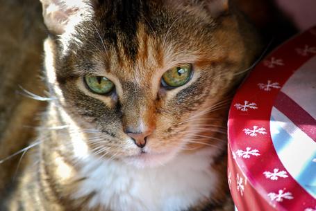 Фото Кошка с зелеными глазами