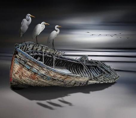 Фото Три аиста на старой полузатопленной лодке, by Nasser Osman