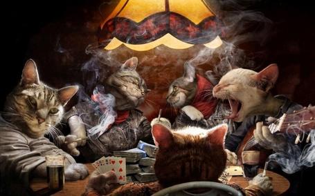 Фото Коты играют в покер и распевают песни под гитару, by Mickey Featherstone