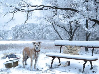 Фото Брошенный пес на цепи стоит у лавочки, by Joy Fully