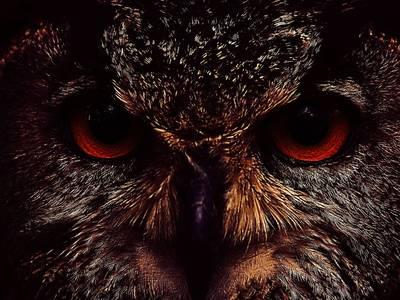Фото Хищная морда совы с красными глазами, крупным планом