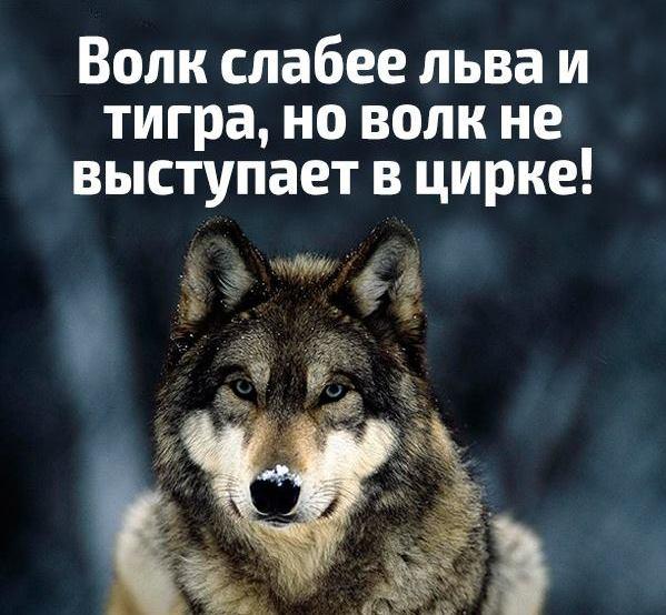 Волки картинки с надписью