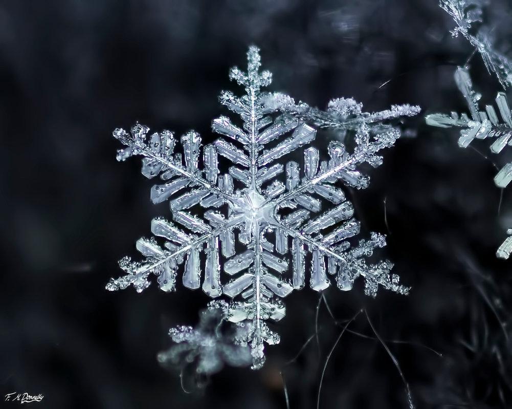 снежинка фото и картинка самом деле