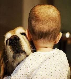 Фото Маленький мальчик повернувшись спиной, обнимает большую собаку