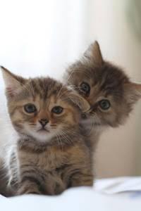 Фото Два милых озорных котенка смотрят на нас