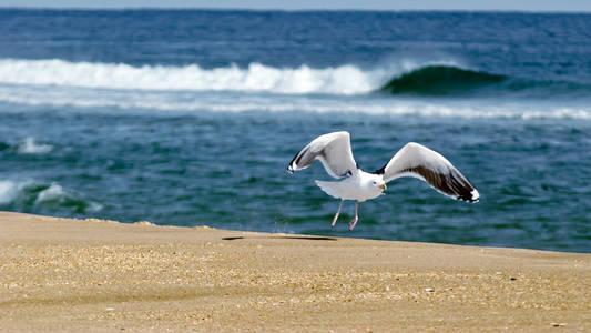 Фото Чайка взлетает на берегу моря