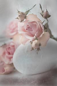Фото Розовые розы, фотограф Юлия Густерина