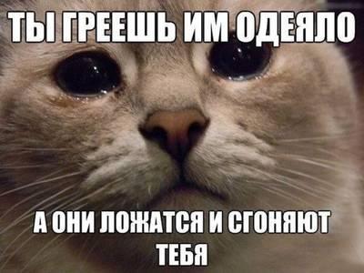 Фото Обиженная морда кошки (Ты греешь им одеяло, а они ложатся и сгоняют тебя)