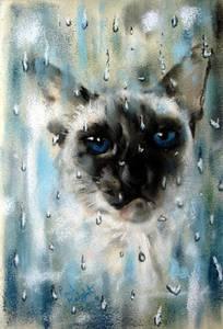 Фото Кошка с голубыми глазами га фоне окна с каплями дождя, художник-анималист Paul Knight