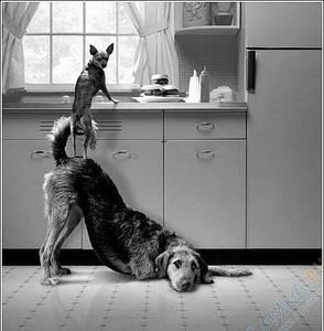Фото Когда друг рядом