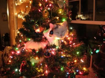 Фото Кот забрался на новогоднюю елку