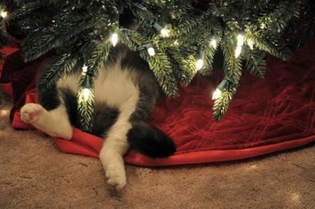 Фото Кот лежит под елкой