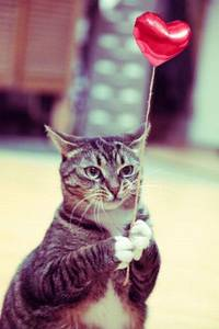 Фото Кот с воздушным шариком в форме сердечка