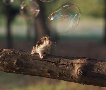 Фото Мышонок наблюдает за мыльными пузырями, сидя на ветке