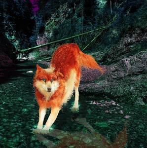 Фото Голубоглазый огненно-рыжий волк ступил лапами в лесной ручей, by Penguiduck
