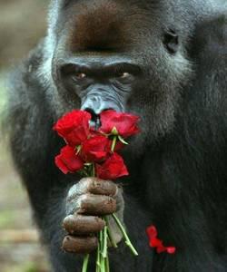 Фото Обезьяна с букето роз