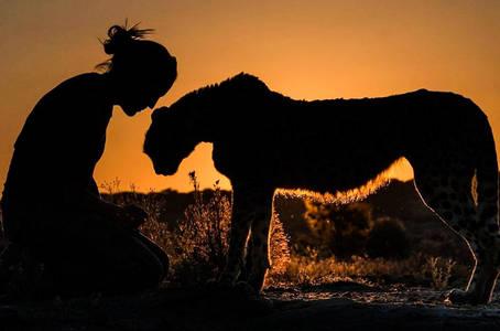 Фото Прогулка с гепардом на закате, Намибия