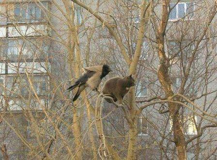 Фото Кот и ворона сидят на дереве