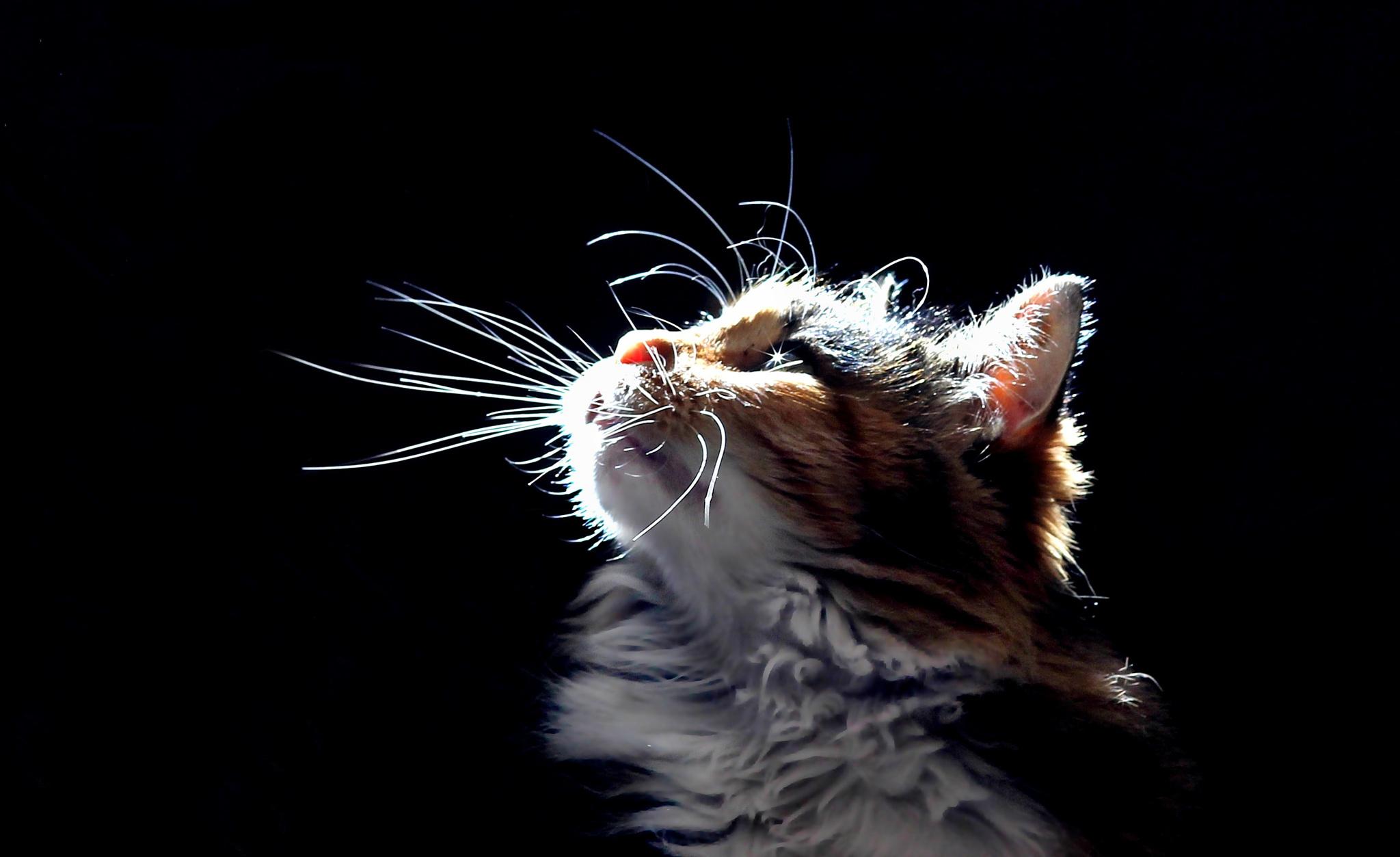 данная картинки котят которые смотрят вверх они визуально
