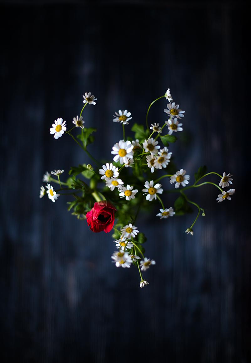 Ромашки и розы картинка