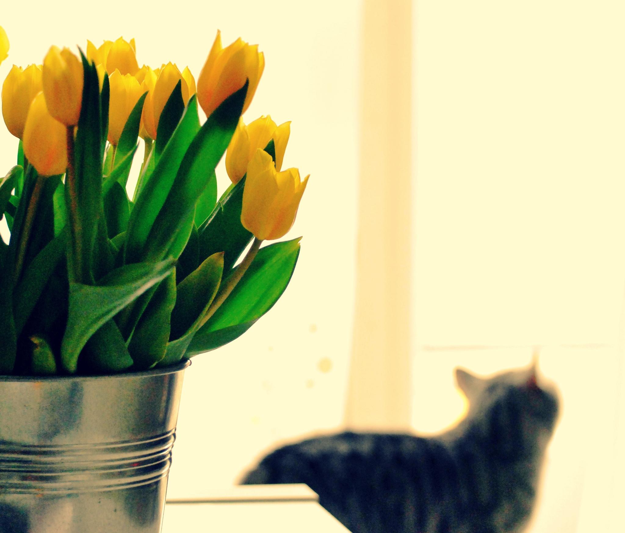 тюльпаны в ведре фото кастрюлю супом приходится