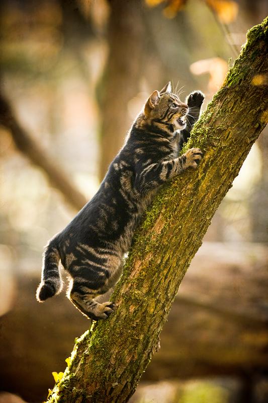 Фото Кошка на дереве, by Sblourg