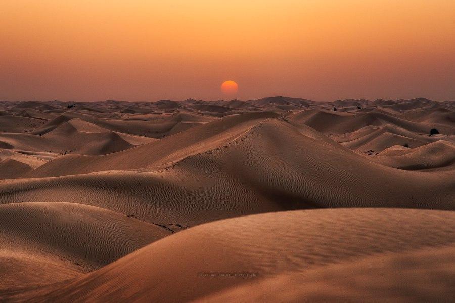 семена первый картинки природной зоны пустыни диаскинтест первый день