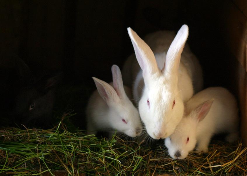 пять кроликов картинка того, будет