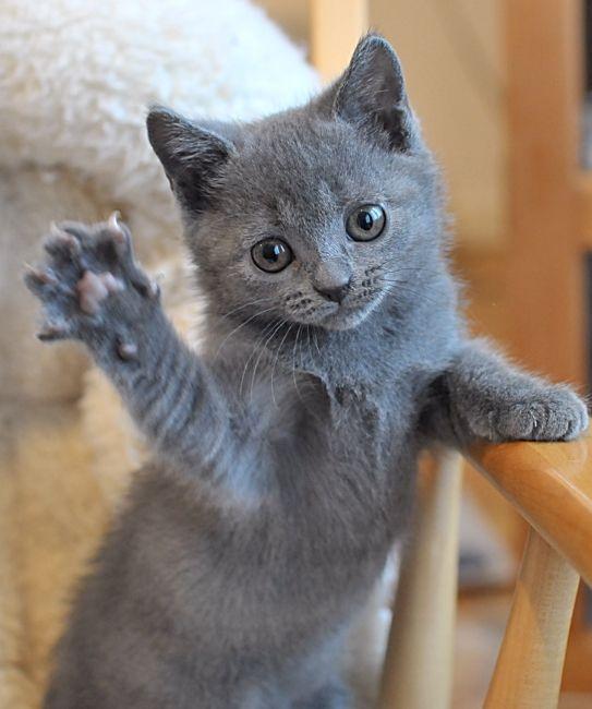 этот картинки котенок машет инфинити фабрики мебели