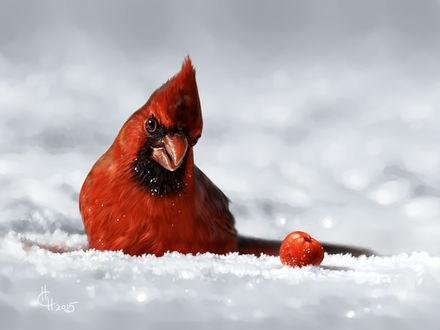 Фото Птица красный кардинал сидит в снегу, by Animal75artist