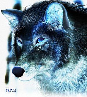 Фото Красивый волк с голубыми глазами, by Penguiduck