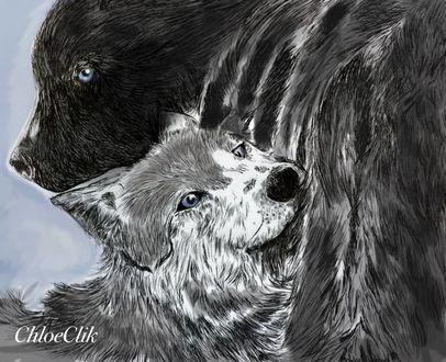 Фото Объятия волка и медведя, by ChloeClik