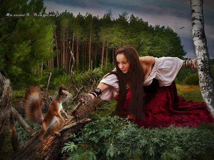 Фото Девушка подает в блюдце орешки белке, стоящей на поваленном дереве, Малышев Владимир