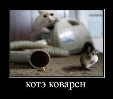 Фото Кот подманивает мышку к отверстию трубки пылесоса, спрятавшись и держа лапу на кнопке включения (котэ коварен)