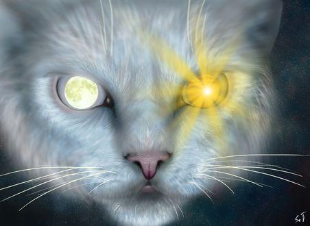Фото Морда голубого кота с глазами, в которых луна и солнце