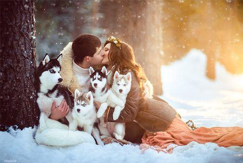 Фото Парень и девушка целуются, сидя на снегу, в окружении щенков породы хаски, фотограф Елена Смирнова
