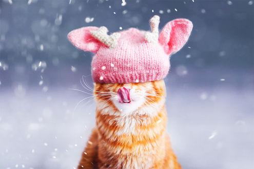 Фото Кот в шапочке и с высунутым языком, ву Kristina Makeeva