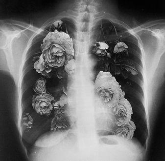 Фото Снимок человека, внутри которого розы
