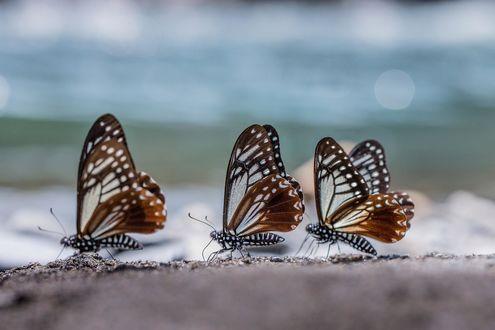 Фото Три красивых бабочки на морском берегу