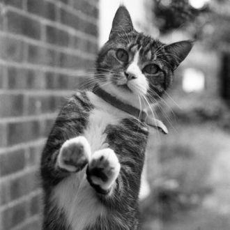 Фото Кошка стоит на задних лапах