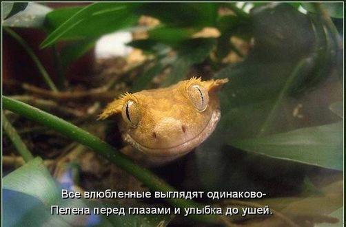Фото Улыбающаяся ящерица (Все влюбленные выглядят одинаково, пелена перед глазами и улыбка до ушей)