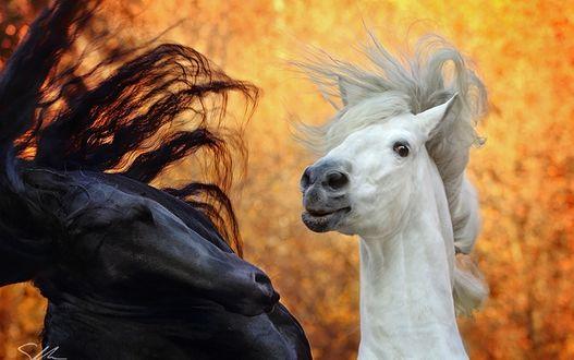 Фото Две влюбленные лошади, by sowi01