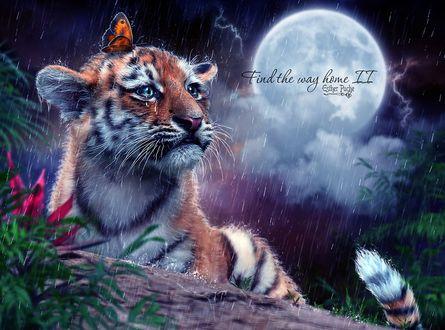 Фото Грустный тигренок, на мордочке которого сидит бабочка, под дождем, by EstherPuche-Art (Find the way home II)