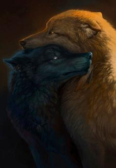 Фото Два влюбленных волка, by Aivoree