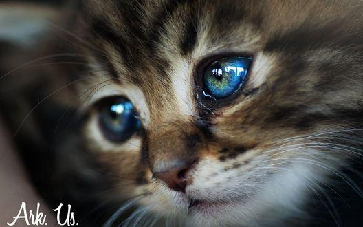 Фото Котенок с грустными глазами, вy Arkus83