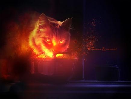 Фото Чарующий кот, by tamaraR