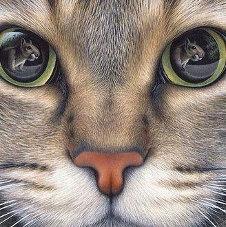 Фото Кот крупным планом, в глазах которого отражается хомяк